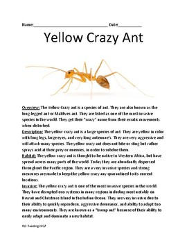 Yellow Crazy Ant - invasive species - review article facts information questions