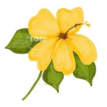 Yellow Hibiscus Illustration, Hibiscus clip art Printable