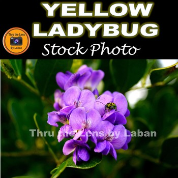 Yellow Ladybug on a Spring Flower Stock Photo #270