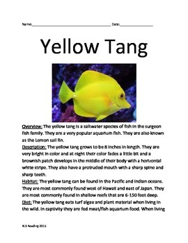 Yellow Tang - Fish Informatinal Article Questions Facts Vocab Finding Nemo