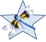 Yellow and Black Dragonfly Star (png)