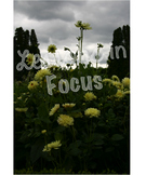 Yellow dahlias with clouds