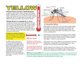 Yellow fever & Teddy Bodain: from mosquitoes to immunity
