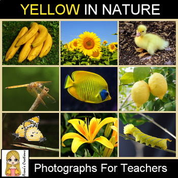 Yellow in Nature Photograph Pack