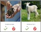 Yes/No Questions about Animals