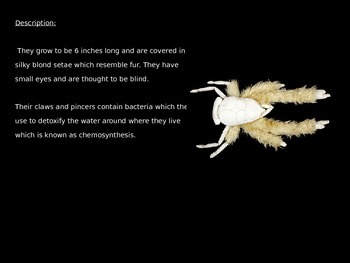 Yeti Crab - Power Point Information Facts Pictures