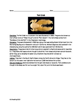 Yeti Crab - Review Article Facts Pictures Information Vocabulary Word Search