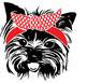 Yorkshire Terrier Whit Bandana Silhouette SVG Head face Dog Puppy Family Pet 883