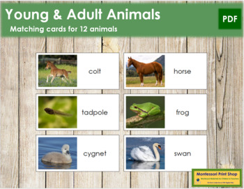Young and Adult Animal Cards