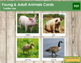 Young and Adult Animal Cards  - Toddler