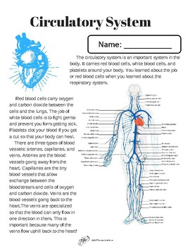 Your Body's Systems by ARR Education | Teachers Pay Teachers