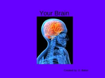 Your Brain Power Point Presentation