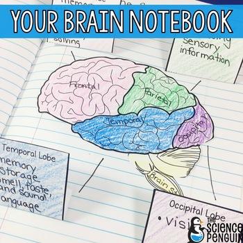 Music language and the brain patel pdf viewer