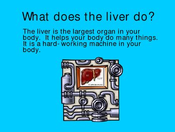 Your Liver Power Point Presentation