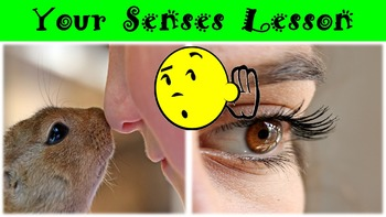 Your Senses No Prep Lesson with Power Point, Worksheet, an