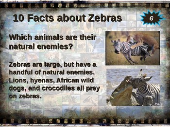 ZEBRA: 10 facts. Fun, engaging PPT (w links & free graphic organizer)