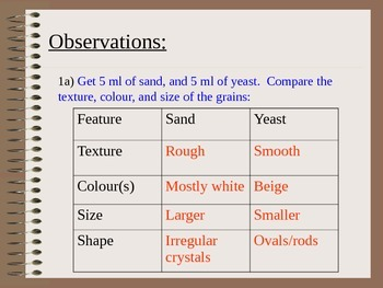 ZLesson 02 Yeast vs. Sand Answers