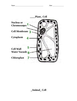 ZLesson 03 Plant and Animal Cells Answers