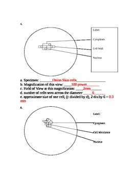 ZLesson 04 Plant Vs. Animal Cells Lab Answers