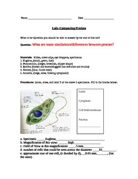 ZLesson 11 Comparing Protists Answers