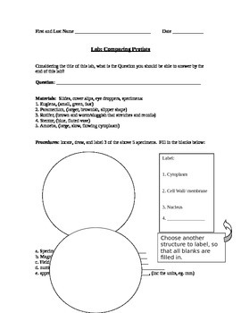 ZLesson 11 Comparing Protists Worksheet