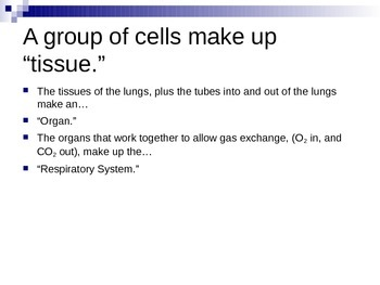 ZLesson 16 Respiratory System