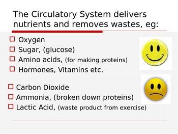 ZLesson 18 Circulatroy System