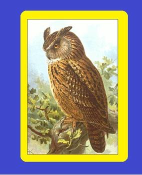 ZOO ANIMALS PUBLIC  DOMAIN CLIP ART – OWLS (100+ IMAGES!)