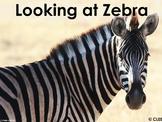 African Animals: Zebra - PDF presentation