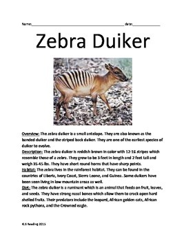 Zebra Duiker - Informational Article antelope facts questions vocabulary
