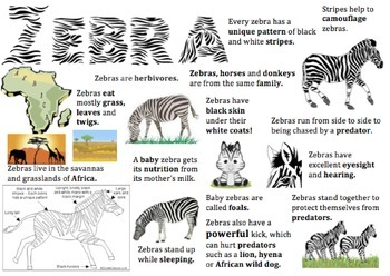 Zebra Information Report Visual