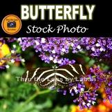 Zebra Longwing Butterflies Stock Photos #284 and #285