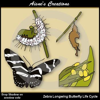Zebra Longwing Butterfly Life Cycle Clip Art
