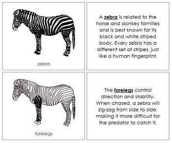 Zebra Nomenclature Book