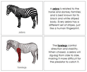 Zebra Nomenclature Book (Red)