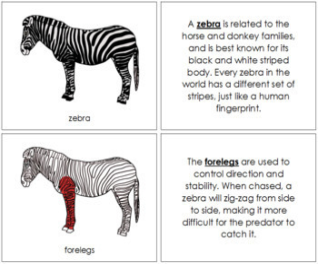 Zebra Nomenclature Book (Red)