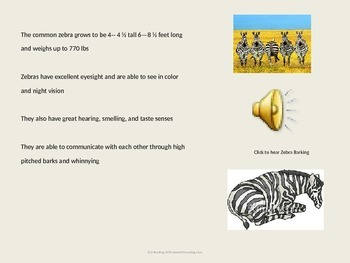 Zebra - Power Point - Information Facts Pictures History