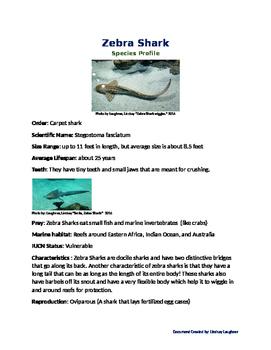 Zebra Shark Species Profile