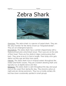 Zebra Shark - informational article lesson facts questions word search