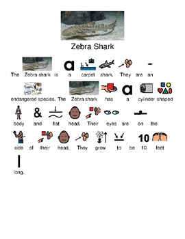 Zebra Shark - picture supported text lesson questions visuals