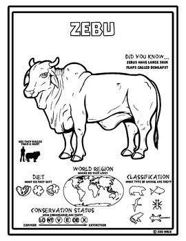 Zebu -- 10 Resources -- Coloring Pages, Reading & Activities