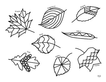 Free Printable Leaf Coloring Pages For Kids | 270x350