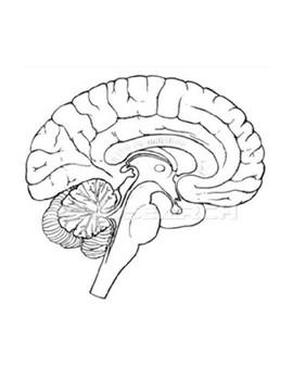 Zombie Brain Scan - Regions of the brain