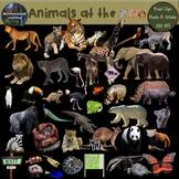 Zoo Animals Clip Art  Photo & Artistic Digital Stickers Ov