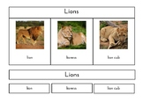Zoo Animal Families (3 Part Montessori cards)