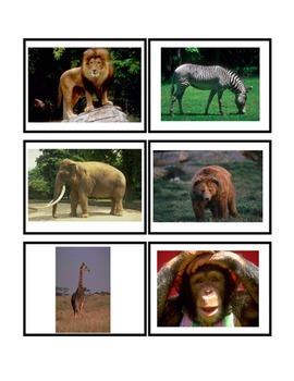 Zoo Animal Flash Cards