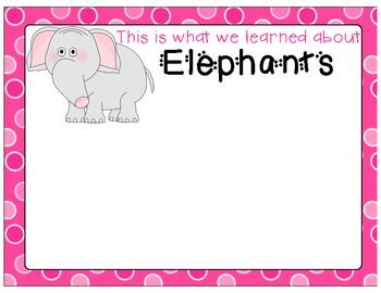 Zoo Animal Graphic Organizer
