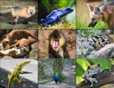 Zoo Animal Pictures/Photos - Clip Art Pack for Commercial Use