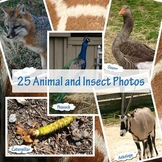 Zoo Animal Photos