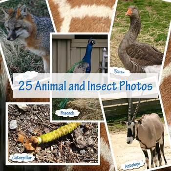 Zoo Animal Photos